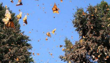 Vallée des papillons